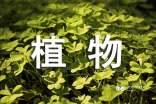 小学种植植物观察千亿国际qy886