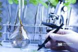 观察日记植物300字_多肉植物观察日记_日记300字