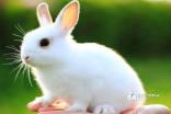 小兔子的观察千亿国际qy886